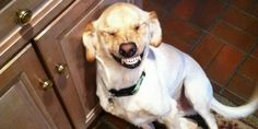 23 ridiculously unphotogenic pets that hate the camera
