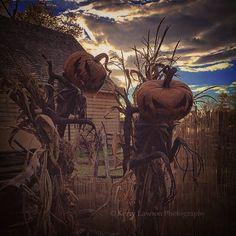 scarecrows pumpkin reapers Halloween
