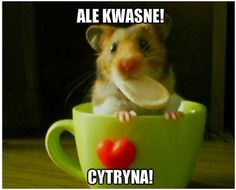 Cytryna O.O!