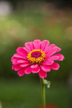 Flower... by Shizuko  on 500px