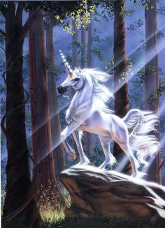a well hidden secret says that if you close your eyes and say your prayers, your own Unicorn takes them to God