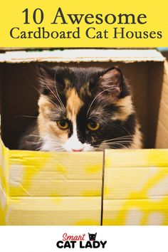 Cat Care Does your cat love to play and hang out in their own little area? Cats love a little shelter. Have some fun and check out our picks for the best cardboard cat houses. Cardboard Cat House, Gatos Cat, Angora Cats, Cat Tent, Cat Whisperer, F2 Savannah Cat, Dog Area, Cat Accessories, Cat Food