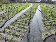 Permaculture Farming, Nagano, Railroad Tracks, Past, Adventure, Photos, Past Tense, Pictures, Adventure Movies