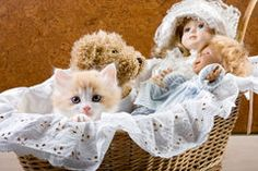 Cat in a cradle Royalty Free Stock Image