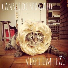 http://www.hypeness.com.br/2013/10/serie-de-fotos-criativas-mostra-a-vida-do-pet-que-cansou-de-ser-gato/
