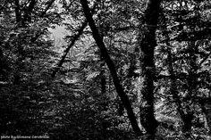 « Nel mezzo del cammin di nostra vita mi ritrovai per una selva oscura, ché la diritta via era smarrita. »