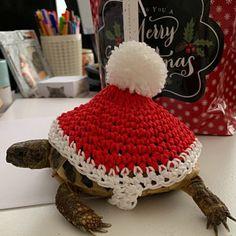 Little chick tortoise cozy Pet Turtle, Baby Turtles, Jurassic World 3d, Tortoise House, Turtle Sweaters, Happy Turtle, Turtle Habitat, Sulcata Tortoise, Dinosaur Outfit