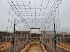 Budget wise grape arbor >> I had not the funds to build a wooden arbor/trellis for the climbing plants and massive grape vine. This is cheap, strong, and will practically disappear unless you look at it closely. Cattle Panel Trellis, Cattle Panels, Cattle Panel Fence, Grape Trellis, Grape Arbor, Pea Trellis, Cucumber Trellis, Arbors Trellis, Trellis Ideas