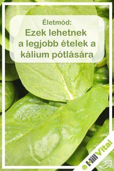 Pickles, Cucumber, Food, Health, Essen, Meals, Pickle, Yemek, Zucchini