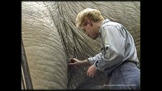 Behind the scenes of JURASSIC PARK. Stan Winston Studio supervisor & co-founder of Legacy Effects, Shane Mahan, sculpts textures into the creases of the T-rex hips.