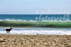 Doberman Beach, Archerdog Photography, Taken in Santa Cruz CA. @Amanda Keller