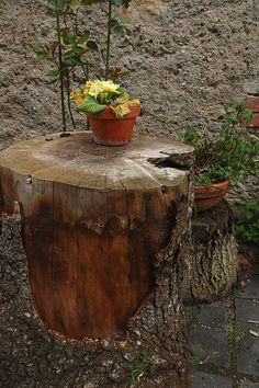 love these weathered tree trunks