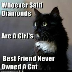 Any cat who eschews diamonds is one demented hussy. How about a collar like a tennis bracelet made up of diamonds and onyx.  Or lapis, or emeralds,  Rubies do nothing to highlight like my silky black fur.