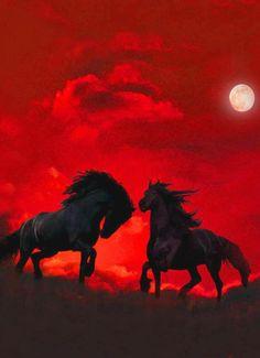 Horses at night..
