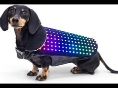 Your Pets will love these..... Links The Pura http://www.noacare.com/ Woof Washer http://www.woofwasher360.com/ Disco Dog http://discodog.nyc/ The Catit http...