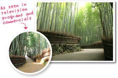 arashiyama route