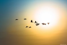 Cormorants, Dawn by Matthew John George on Capture Wisconsin // Near North Point, Lake Michigan, Milwaukee.