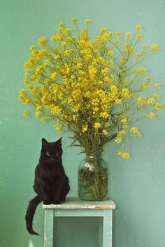 cat, flowers, table