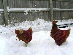 Tee hee, chicken sweaters!