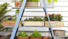 bricolage jardin facile- étagère porte-plantes en vieil escabeau