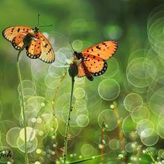 butterfly - butterfly #butterfly