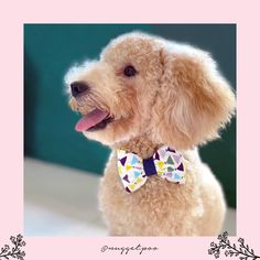 MISTER GEO BOUFFANT BOW TIE DOG COLLAR Bow Tie Collar, Cat Collars, Mild Soap, Large Dogs, Geo, Printing On Fabric, Your Pet, Cotton Fabric, Bows