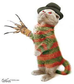 freddy krueger cat
