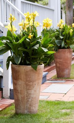 10 Perennials That Add Colorful Style to Decks: Cannas look great in tall container gardens! | From @costafarms