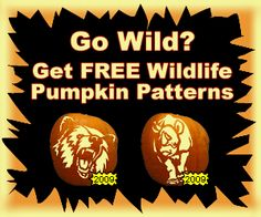 13 Best Halloween Farm Animal Pumpkins Stencils Images On