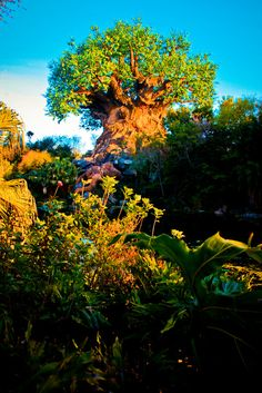 Animal kingdom. cant wait to be here next month!