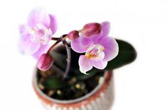 orquídeas baño Feng Shui, Cactus, Succulents, Green, Sim, Relax, Polo, Gardening, Bathroom