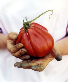 Ineffable Secrets to Growing Tomatoes in Containers Ideas. Remarkable Secrets to Growing Tomatoes in Containers Ideas. Food Styling, Food Photography Styling, Heirloom Tomato Seeds, Heirloom Tomatoes, Fruit And Veg, Fruits And Vegetables, Permaculture, Culture Bio, Vida Natural