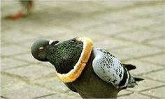 I hate pigeons and therefore love this picture