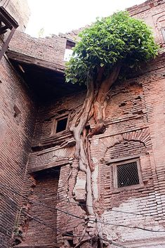 An Abandoned Building. Nature Taking Over. Abandoned Mansions, Abandoned Buildings, Abandoned Places, Beautiful World, Beautiful Places, Weird Trees, Unique Trees, Growing Tree, Tree Art