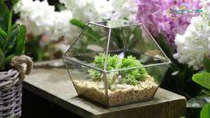 geometric  terrariums Glass Terrarium, Ceramic Planters, Classic Elegance, Artificial Plants, Garden Planters, Air Plants, Ceramic Pots, Fake Plants, Garden Container