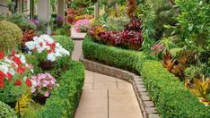 "Red and white petunias and pink impatiens are mixed in with the thousands of bromeliads: ""I need to have flowers too,"" says Pas Lush Garden, Plants, Tropical Garden Design, Bromeliads Landscaping, Backyard Design, Tropical Plants, Bromeliads, Succulents, Garden"