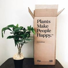 Indoor Potted Plants Delivered to Your Door – The Sill Craft Packaging, Flower Packaging, Packaging Design, Ivy Plants, Potted Plants, Ivy Plant Indoor, House Plant Delivery, Herb Garden Kit, Plants Delivered