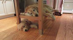 Bunk Beds! :)