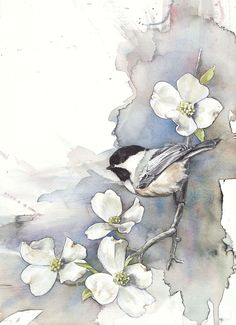 Chickadee on Dogwood by Anne Balogh