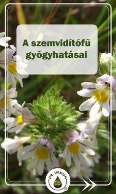 Vertigo, Doterra, Health, Plants, Art, Art Background, Health Care, Kunst, Plant
