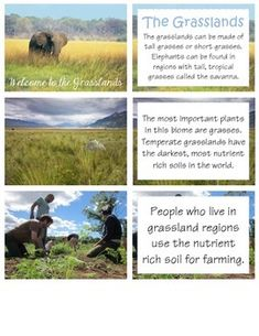 Print, Laminate, and Present... Utilize these 8 lessons and graphic organizer to research the grassland habitat.Lessons/Materials Include:*Welcome to the Grasslands*Grassland Names*Life Cycle of a Mammal*Adaptations*Food Web*Fundamental needs *Wildfires*Life Cycle of a Plant *Grassland 3, 2, 1 Graphic Organizer