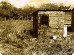 allotment shed