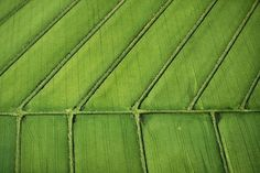 agricultural-fields8