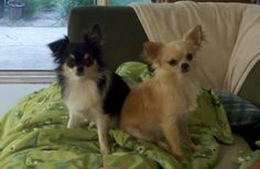 Chloe & Gizmo...our crazy dogs!
