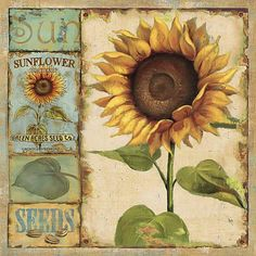 """Premium Thick-Wrap Canvas entitled Sunny Day I. Square large home art decor of a sunflower with four small related images lined vertically to its left. The smaller images include the word """"""""sun"""""""", an illustration of the front of a packet of sunflower Abstract Canvas, Canvas Wall Art, Canvas Prints, Art Prints, Big Canvas, Abstract Print, Framed Prints, Decoupage Vintage, Vintage Seed Packets"""