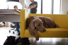 Many people are unable to keep their pet away from your office, but, the odor it leaves behind is not compatible with the image you want