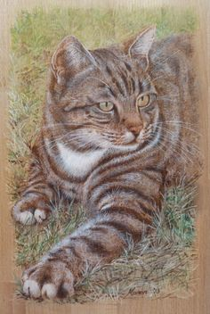 A pyrography done of Mr. Pebble the cat. The colouring was a mixture of water colour pencils and paint. Manon Massari. https://www.facebook.com/OfMiArt