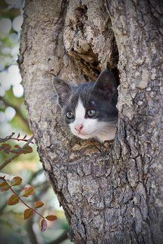 #gatti nei tronchi d'albero.
