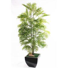 Billedresultat for Chrysalidocarpus Lutescens Small Palm Trees, Small Palms, Bamboo, Plants, Plant, Planets