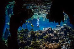 Photographer Anhede – Kickass photos. No more. No less. – Underwater photographer – Freshwater spring in Mexico. #dive #diving #cave #cavediving #snorkeling #cenote #mexico #tulum #underwaterphotography #underwaterphotographer #undervattensfoto #undervattensfotograf #adventurephotography #adventurephotographer #äventyrsfoto #äventyrsfotograf #mexiko #anhede Follow me on: www.anhede.se • www.instagram.com/anhede • www.facebook.com/photographeranhede • https://plus.google.com/+JesperAnhede